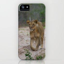Female Lion at Tembe Elephant Park iPhone Case
