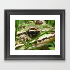 Northern Leopard Frog Framed Art Print