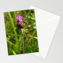 Carduus acanthoides plant, Dolomiti mountains, Italy I Stationery Cards