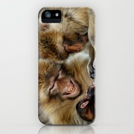 Barbary Macaques iPhone Case