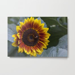 Red Sunflower with Bee Metal Print