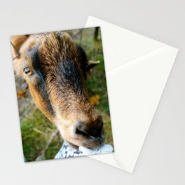 Nibble Time! Stationery Cards