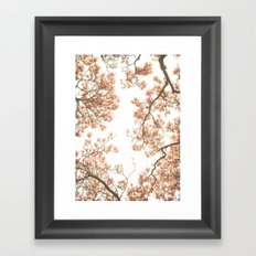 Magnolia Tree Looking Up Framed Art Print