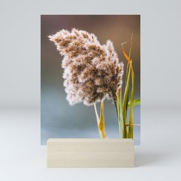 Last Phragmite Standing Photograph Mini Art Print