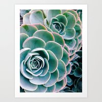 succulents Art Prints featuring Succulents by Ez Pudewa