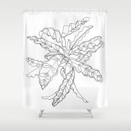 PLANT PORTRAITS - CALATHEA LANCIFOLIA - COOPER  AND COLLEEN Shower Curtain