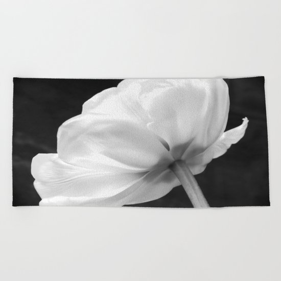 Close-up of white tulip in black background Beach Towel