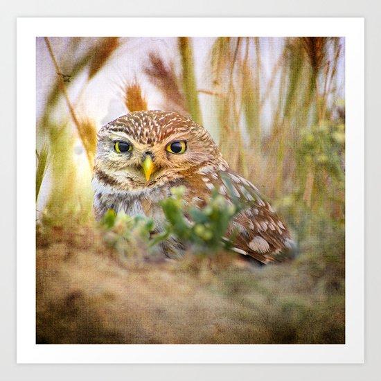 Owl eyes. Sunset in the eyes Art Print