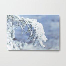 Snowy Spruce Needles 15 Metal Print