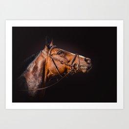 Horse portrait over a dark background. Closeup Horse Head. Art Print
