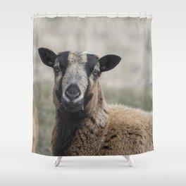 Barbados Blackbelly Sheep Portrait Shower Curtain