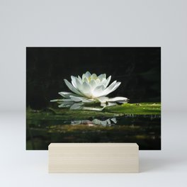 One lonely lily pad bloom in the channel Mini Art Print