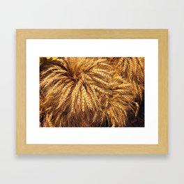 bunch of wheat Framed Art Print