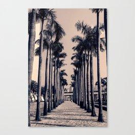 Palm Pathway Canvas Print