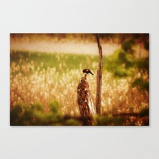 Bird Photography Canvas Print