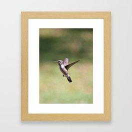 Ruby Throat Humming Bird 2 Framed Art Print