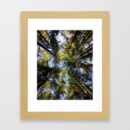 Redwood Canopy Framed Art Print