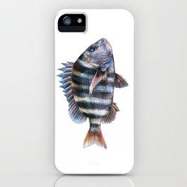 Sheepshead iPhone Case