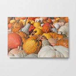 Colorful Fall Pumpkins Metal Print