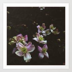 A trail of flowers Art Print