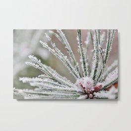 Frosty needles Metal Print