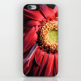 Wilting Red Daisy iPhone Skin