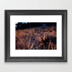 Fall Cones Framed Art Print