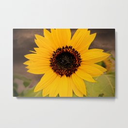 Last summer days Metal Print