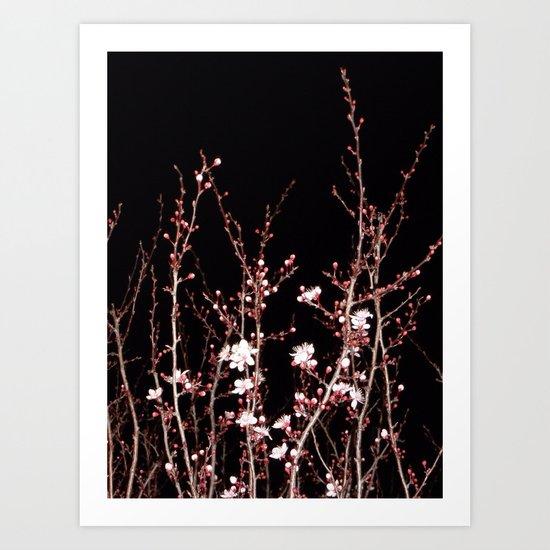 Winter night flowers Art Print