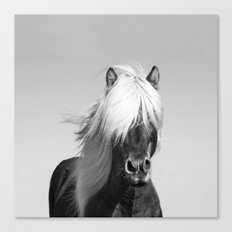 Portrait of a Horse in Scotish Highlands Canvas Print