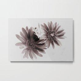 Daisies sepia infrared Metal Print