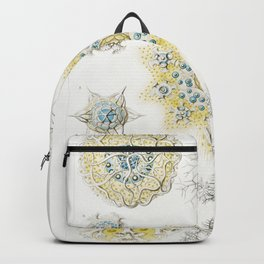 Polycyttaria–Vereins-Strahling Backpack