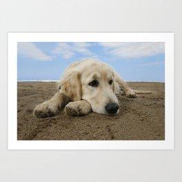 GOLDEN RETRIEVER on the beach Art Print