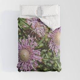 Protea Isopogon Comforters