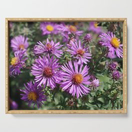 Autumn Amethyst - New England Aster flowers Serving Tray
