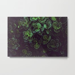 NATURE - LEAVES - FRESH - PHOTOGRAPHY Metal Print