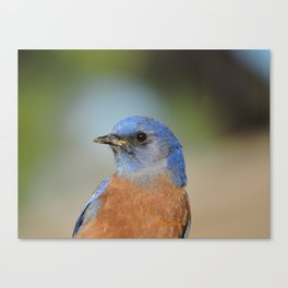 Bluebird in La Verne Canvas Print