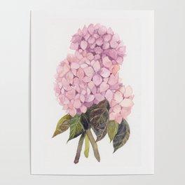 watercolor pink hydrangea Poster