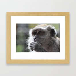 Monkey in Malaysia Framed Art Print