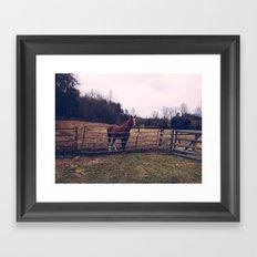 Mountain Horse Framed Art Print