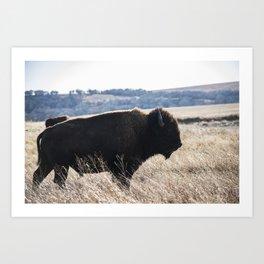 Oklahoma Bison the Tallgrass Prairie Art Print
