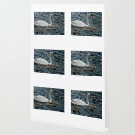Mute Swan & Cygnets Wallpaper