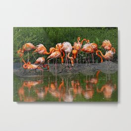Flamingo Reflection Metal Print
