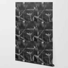 Dragon Fly in Black and White Wallpaper