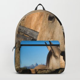 Shy - Horse Plays Coy in Western Wyoming Backpack