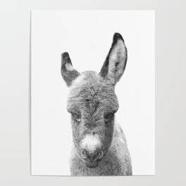 Black and White Baby Donkey Poster