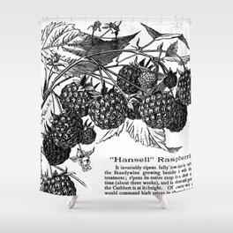 "'Hansell"" Raspberries 1886 Shower Curtain"