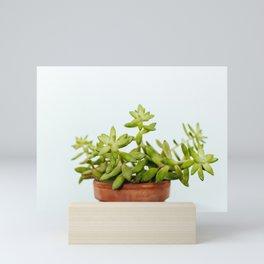 The Unidentified Houseplant Mini Art Print