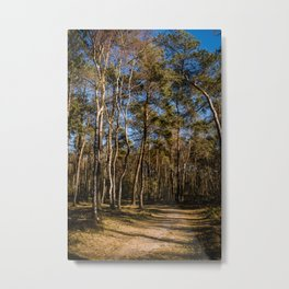 Colorful Landscape Photography - Country road national reserve the Veluwe - Framed art print  Metal Print
