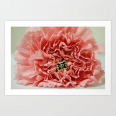 Phi Pin and Carnation Art Print